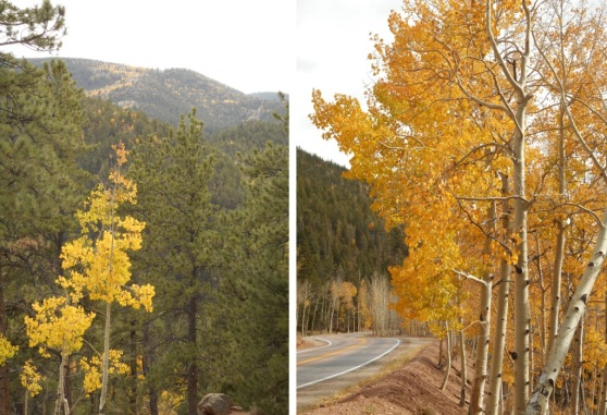 autumn-drive